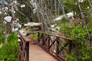 Araluen-Botanic-Park-The-Gardens-24