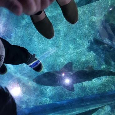 ocean life bangkok shark